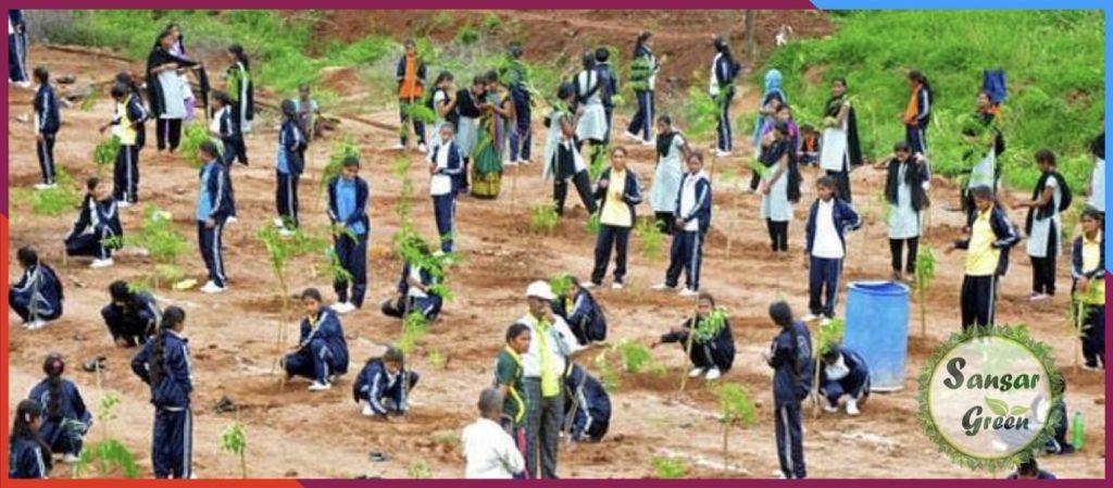 Individual Plantation - Landscape Consultancy - designing - planning in India - sansar green ltd