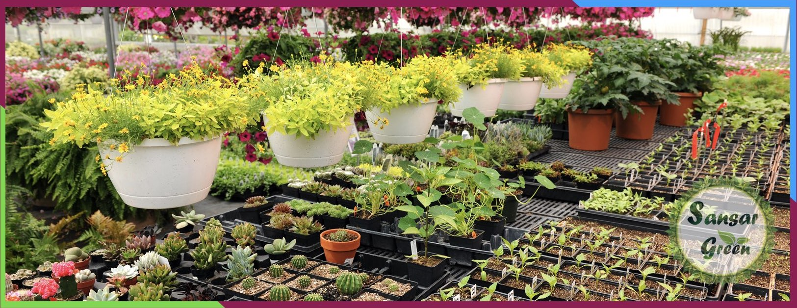 Plant Sale in India - Sansar Green